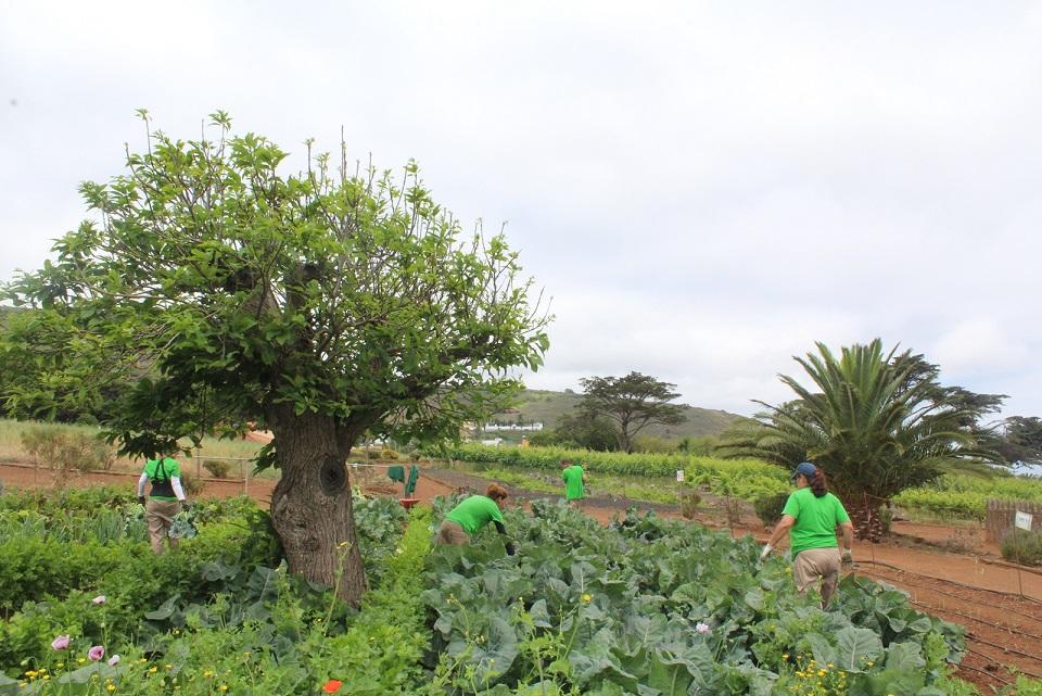 Actividades del PFAE Agroemplea Tegueste 2018 en Mercadillo Tegueste
