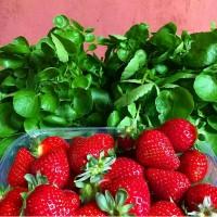 Fresas del Mercadillo del Agricultor de Tegueste