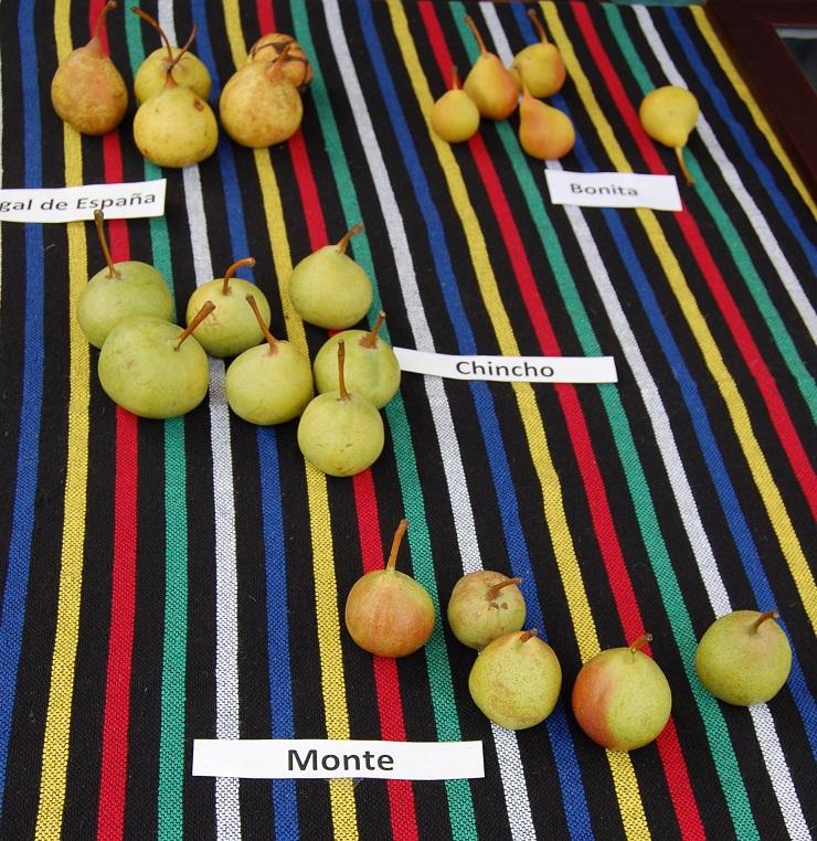 Peras de Tenerife en el Mercado del Agricultor de Tegueste