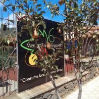 Peras de Tenerife en el camino a Mercado del Agricultor de Tegueste