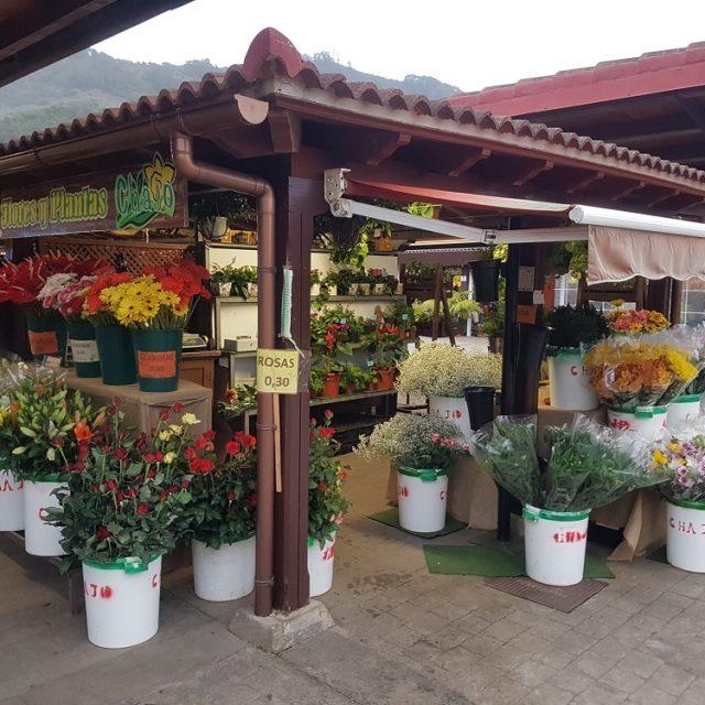 Flores y Plantas Chajo en Mercadillo de Tegueste