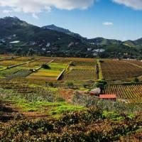 Mercado del agricultor de Tegueste y RURALPEST