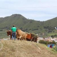 Foto cedida Ayuntamiento de Tegueste