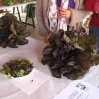 Producto local en Mercado del Agricultor de Tegueste