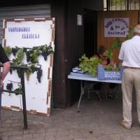 VIII Concurso Racimos (Sept. 2011)